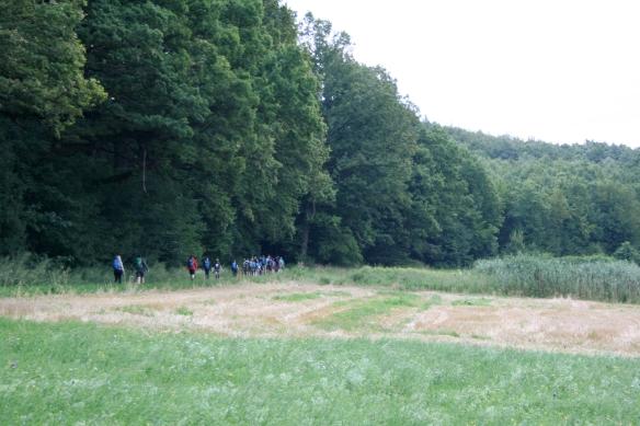 Wald_03.JPG